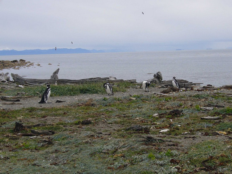 Penguins on the Shore - Patagonia