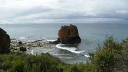 Photo of Melbourne Great Ocean Road Small-Group Eco-Tour from Melbourne SAM_3918