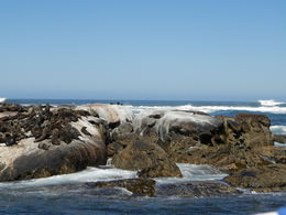 Photo of Cape Town Cape Peninsula Tour from Cape Town Seal Island optional side tour