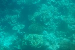Photo of Cairns & the Tropical North Great Barrier Reef Diving and Snorkeling Cruise from Cairns Semi-submersible submarine