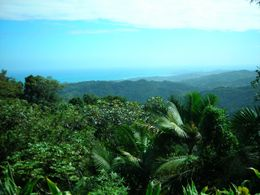 Photo of San Juan El Yunque Rainforest Half-Day Trip from San Juan A view from the top