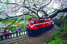 Photo of Taipei 3-Day Tour of Sun Moon Lake, Puli, Lukang and Alishan National Scenic Area from Taipei Alishan