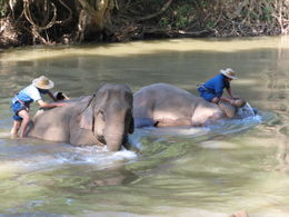 Photo of Chiang Mai Chiang Dao Elephant Jungle Trek and Ping River Rafting Tour from Chiang Mai Bath Time