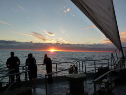 Cruising out of the sound under full sail and enjoying a beautiful NZ sunset over the Tasman Sea , Ian M - May 2012