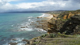 Photo of Melbourne Great Ocean Road Small-Group Eco-Tour from Melbourne SAM_3928
