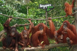 Photo of Singapore See Singapore Attraction Pass Singapore Zoo