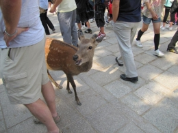This cute little deer was smiling. The deer park was amazing.. 1000 friendly deers that want some crackers! - June 2010