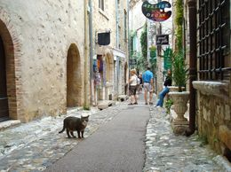A cat in St. Paul-de-Vence., Melissa S - June 2010