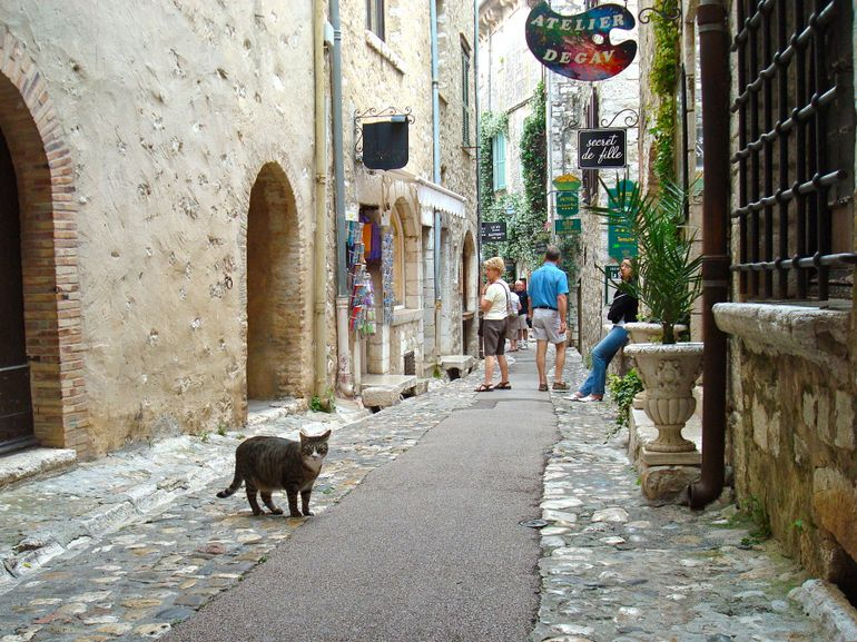 Un chat - Nice
