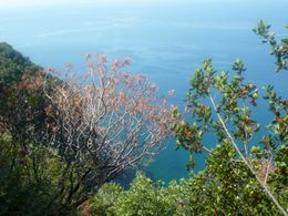 Photo of Florence Cinque Terre Small Group Day Trip from Florence Trail