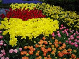 Photo of Amsterdam Amsterdam Super Saver 1: Keukenhof Gardens Day Trip and Amsterdam City Tour Keukenhof Gardens