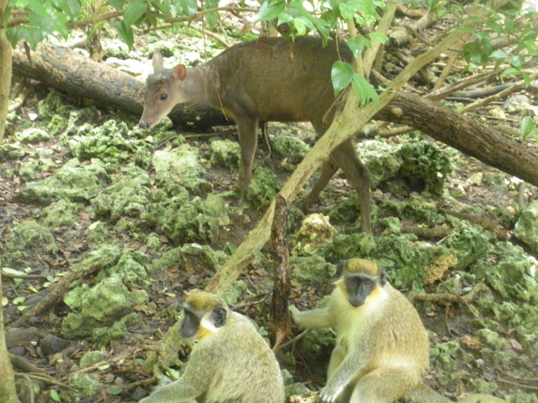 The Wildlife Reserve - Barbados