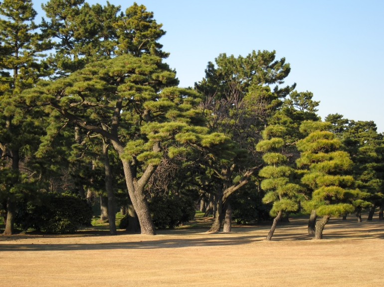 Imperial Palace forest - Tokyo