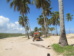 Photo of Punta Cana Punta Cana Half-Day Dune Buggy Adventure Leaving the beach