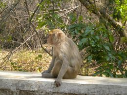 one can be very close to monkeys by taking some amount of risk , EXPLORE GLOBE - March 2012
