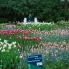 Photo of Amsterdam Keukenhof Gardens and Tulip Fields Tour from Amsterdam Sitting among the tulips