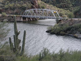 Photo of Phoenix Apache Trail / Canyon Lake Steamboat Cruise The majestic suguaro