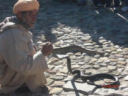 Photo of Costa del Sol Tangier, Morocco Day Trip from Costa del Sol The Snake Charmer