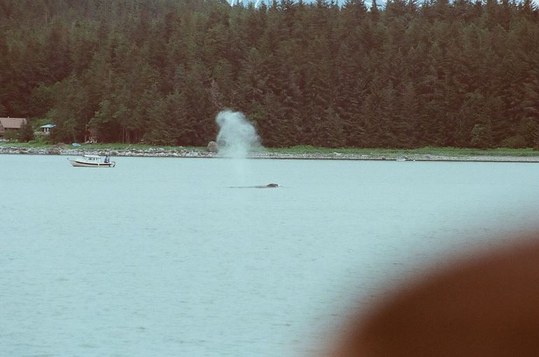 There she blows!! - Juneau