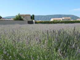 Photo of Avignon Small Group Provence and Lavender Museum Day Trip from Avignon View from the Lavender museum