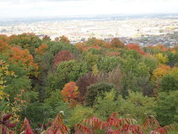Photo of   Fall colors and the city from Mount Royal