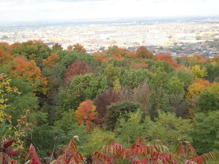 Fall colors and the city from Mount Royal