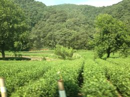 Photo of Shanghai Hangzhou: Heaven on Earth Day Trip from Shanghai Meijiawu Tea Village