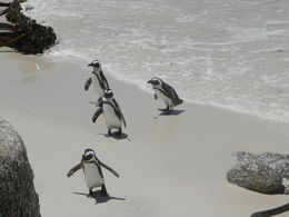 Photo of Cape Town Cape Peninsula Tour from Cape Town penguin colony