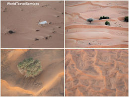 Photo of Dubai Dubai Hot Air Balloon Flight Sanddunes and cattle