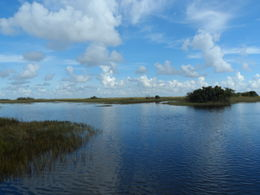 Photo of Miami Miami Super Saver: Everglades Airboat Adventure and Miami City Tour the everglades