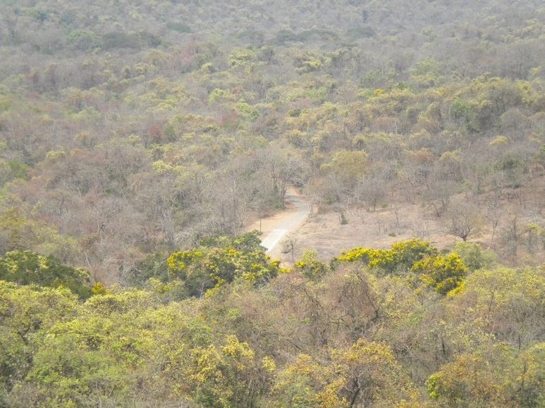 View of road in the Park taken from top of Kanheri Hills -