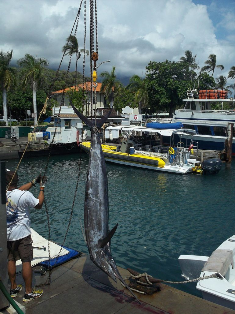 Catching fish on the dock. - Maui