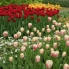 Photo of Amsterdam Keukenhof Gardens and Tulip Fields Tour from Amsterdam Keukenhof Gardens - Amsterdam
