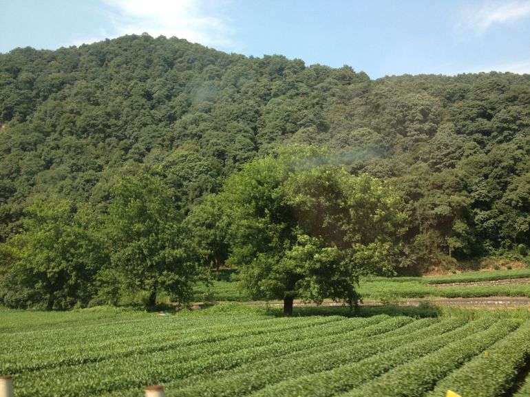 Meijiawu Tea Village - Shanghai