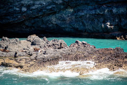 Photo of Christchurch Akaroa Harbour Nature Cruise Seals sunning themselves