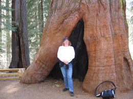 Photo of San Francisco Yosemite National Park and Giant Sequoias Trip Base of Tree