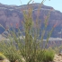 Photo of Las Vegas Grand Canyon All American Helicopter Tour Plant life in Canyon