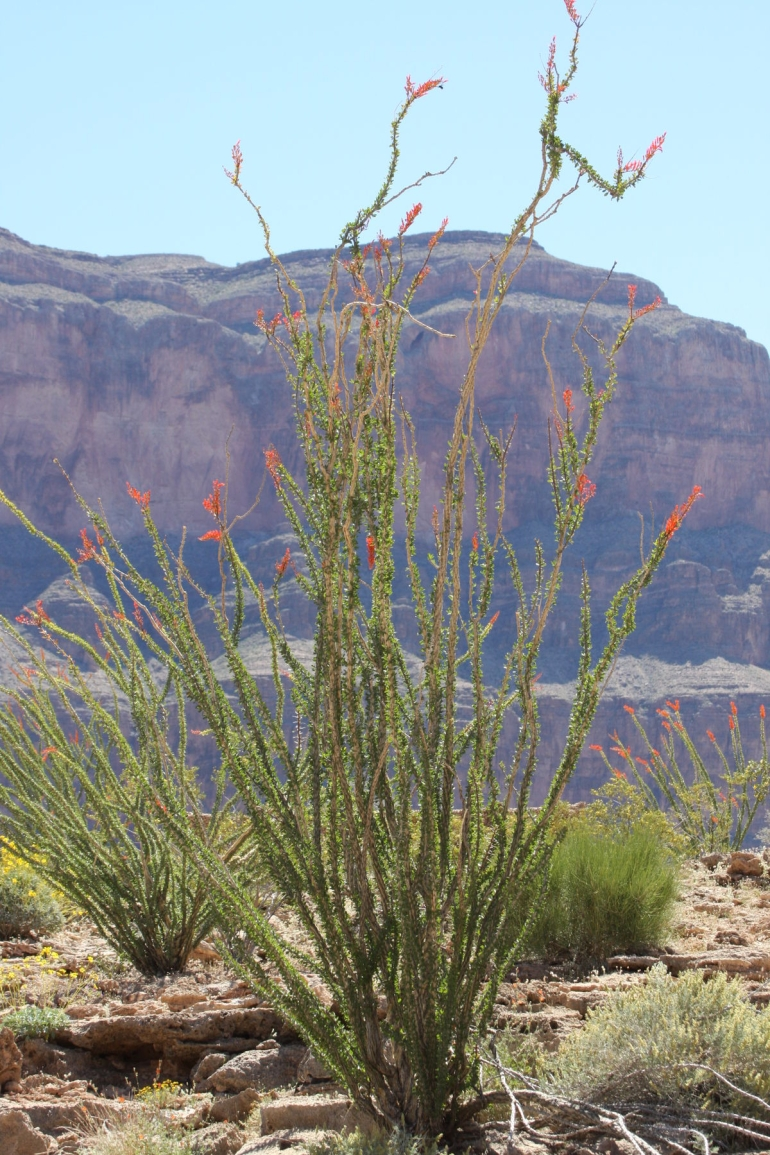 Plant life in Canyon - Las Vegas