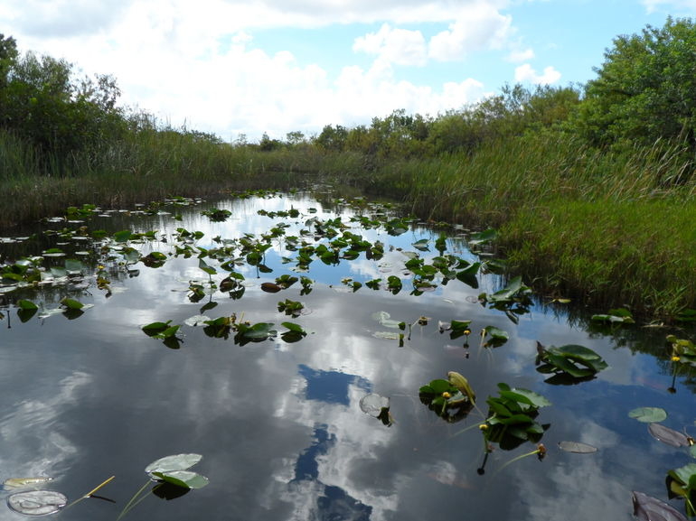 the everglades - Miami