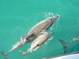 Photo of   Dolphins in New Zealand