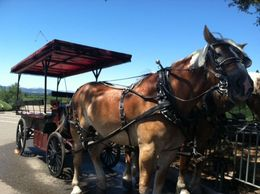 Photo of Napa & Sonoma Wine Country Tour by Horse and Carriage Horse Drawn Carriage