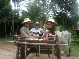Photo of Bangkok Khao Yai National Park and Elephant Ride Day Trip from Bangkok Ox & cart ride