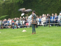 Demonstration of falconry is one of the live demonstrations. Warwick has events every day of the week., Thomas W - June 2010