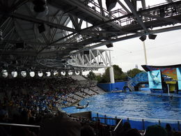 Photo of Orlando SeaWorld® Orlando Ticket Shamu at work
