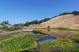 Beautiful setting for Nicholson Ranch winery , gagsnel - June 2014
