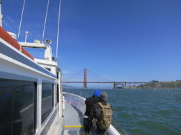 Photo of San Francisco Whale Watching & Wildlife Eco Tour from San Francisco View of the Golden Gate