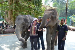 Photo of Kuala Lumpur Private Tour: Elephant Orphanage Sanctuary Day Tour from Kuala Lumpur Feeding the Babies