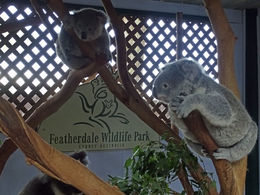 The Featherdale Wildlife Zoo is small, but it is a fantastic way to continue the tour after the nature walk. , Jason C - May 2016
