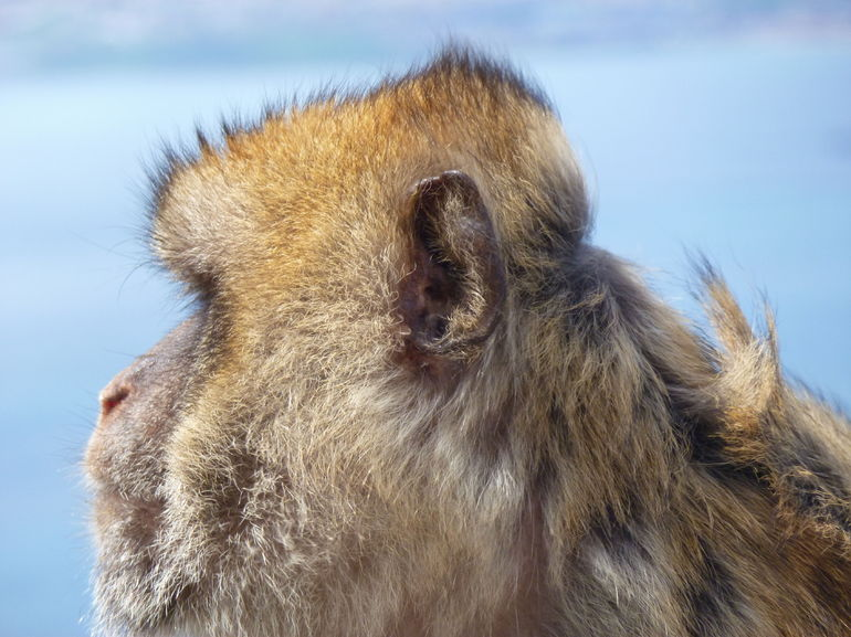 Monkeying around in Gibraltar - Costa del Sol