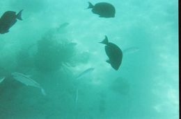 I took this picture at the second snorkeling location. It was amazing and I would definitely invest in an underwater camera. I bought a Kodak disposable one for less than $15. - August 2010